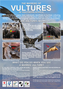 vulture marking poster_National