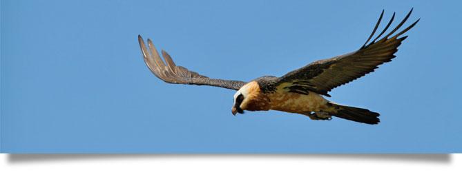 drakensberg birds