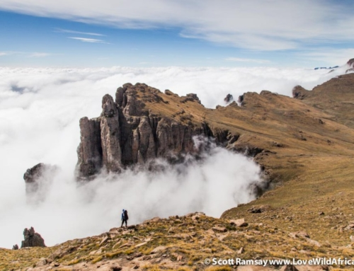 Hiking the northern Drakensberg